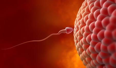 Yumurtlama (Ovulasyon) Olmadan Hamile Kalınabilir Mi?