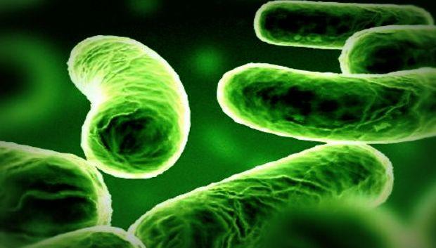 Hamilelikte Listeria Enfeksiyonu Tehlikesi