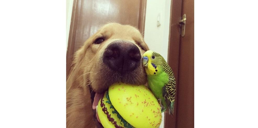 Hamilelikte Köpek ve Kuş Beslemek