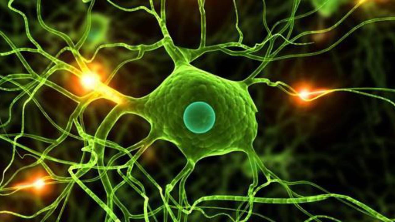 Kök Hücre Nakli İle Tedavi Edilebilen Durumlar