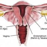 rahim-kanseri-7(1)